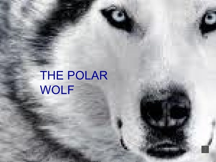 Rocio and melanie  the polar wolf