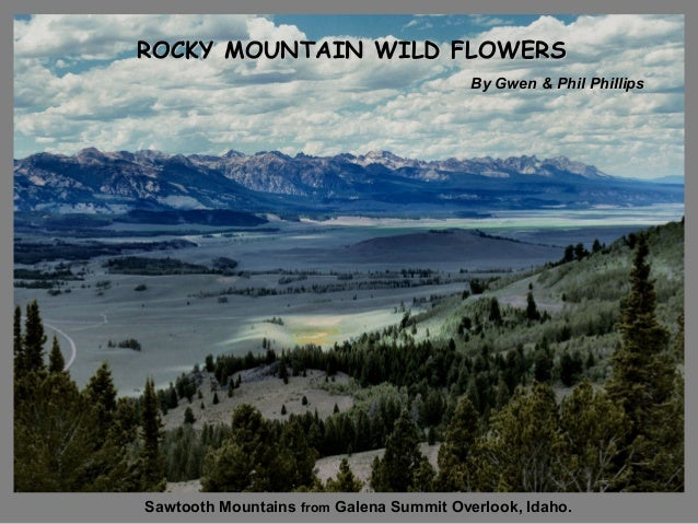 ROCKY MOUNTAIN WILD FLOWERS By Gwen & Phil Phillips  Sawtooth Mountains from Galena Summit Overlook, Idaho.