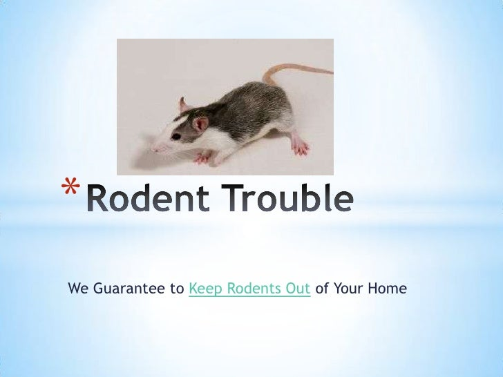 *We Guarantee to Keep Rodents Out of Your Home