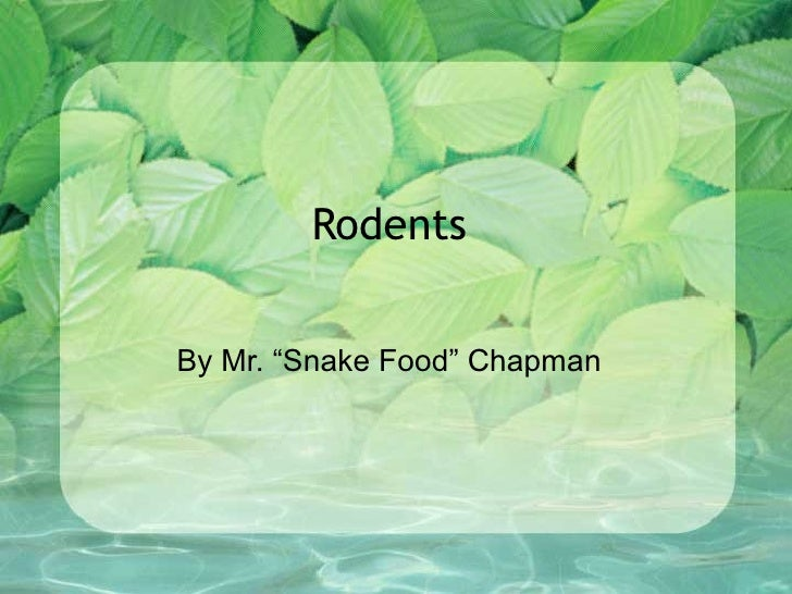 """RodentsBy Mr. """"Snake Food"""" Chapman"""