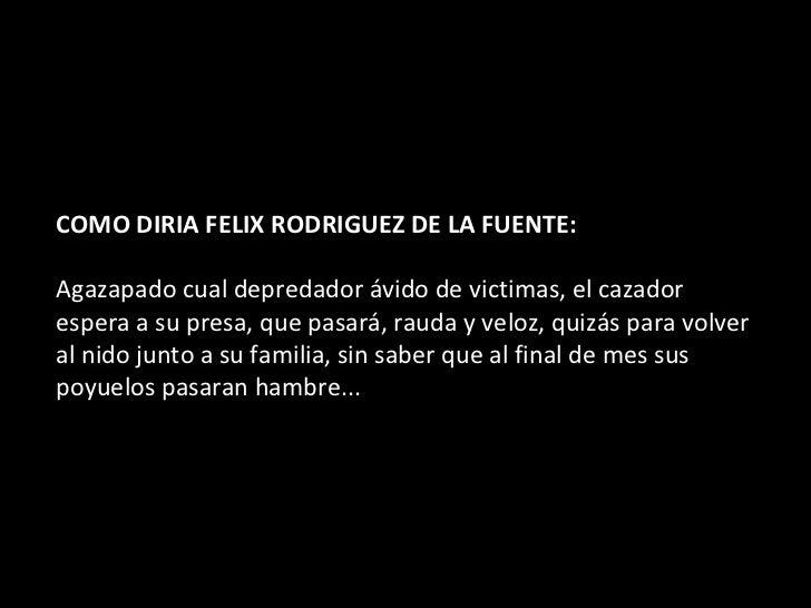 COMO DIRIA FELIX RODRIGUEZ DE LA FUENTE:    Agazapado cual depredador ávido de victimas, el cazador espera a su presa, qu...