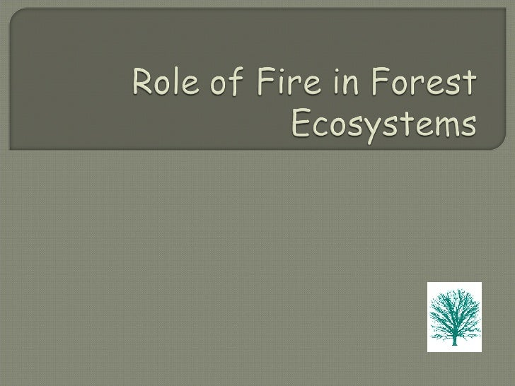 Role Of Fire In Forest Ecosystems