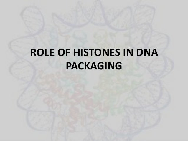 ROLE OF HISTONES IN DNA PACKAGING