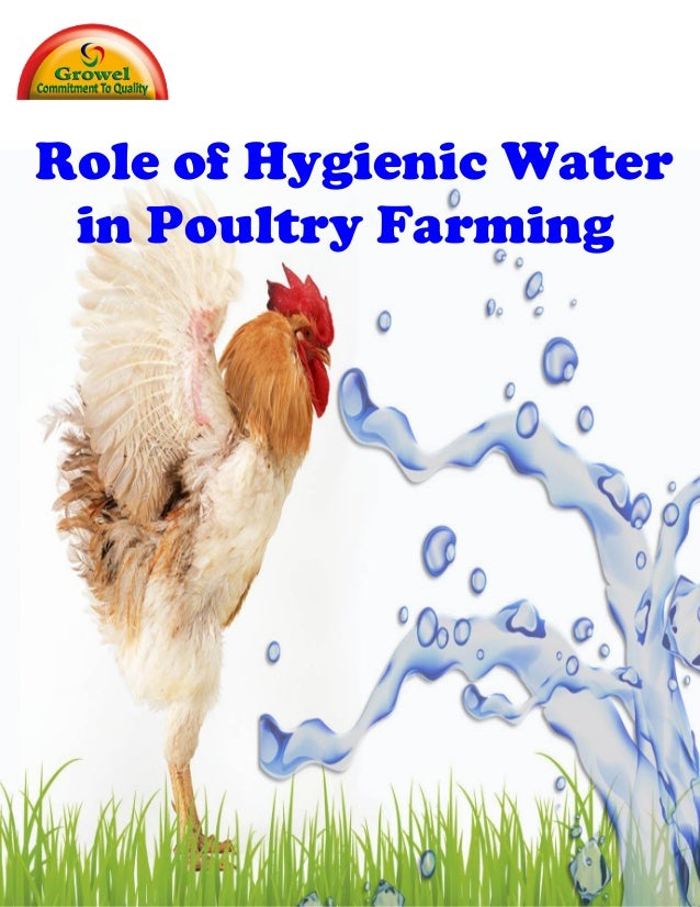 Role of Hygienic Water in Profitability of Poultry Production . Profitability in poultry production can only be optimized ...
