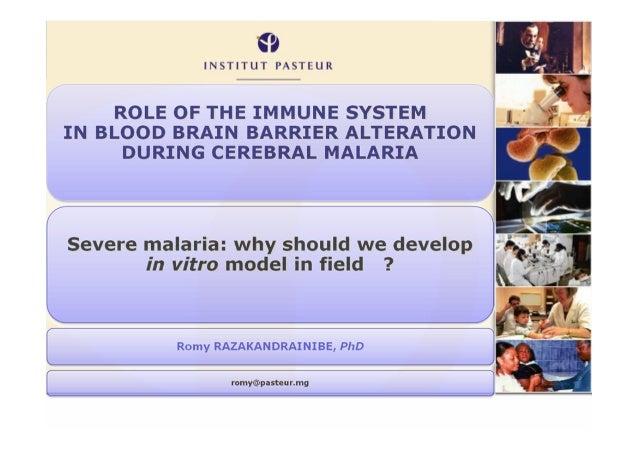 Paludisme grave : pourquoi doit-on développer des modèles in vitro sur le terrain ?