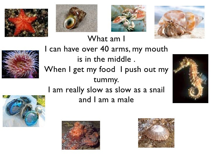 What am I I can have over 40 arms, my mouth           is in the middle . When I get my food I push out my                 ...