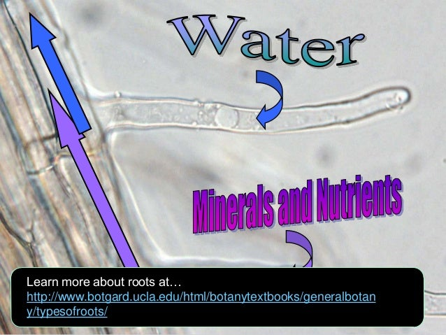 Roots and Water, Plants Biology Lesson PowerPoint