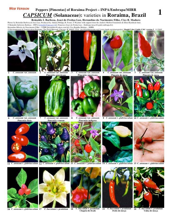Roraima, amazonia  - capsicum peppers