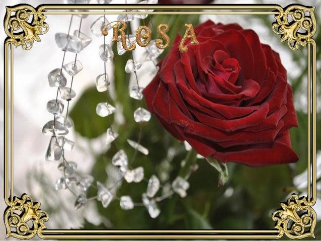 Rosa  ildy