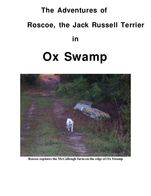The Adventures of Roscoe, the Jack Russell Terrier in Ox Swamp Roscoe explores the McCollough farm on the edge of Ox Swamp