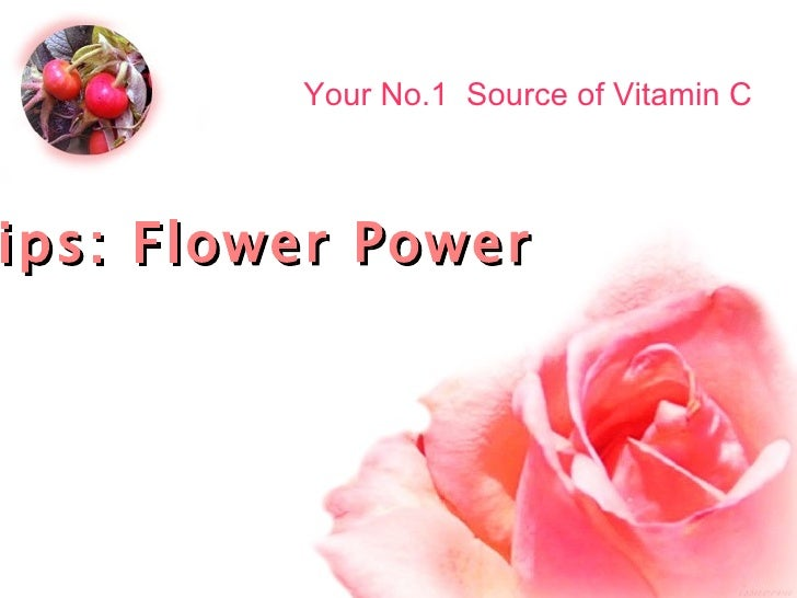 Rose Hips: Flower Power Your No.1  Source of Vitamin C