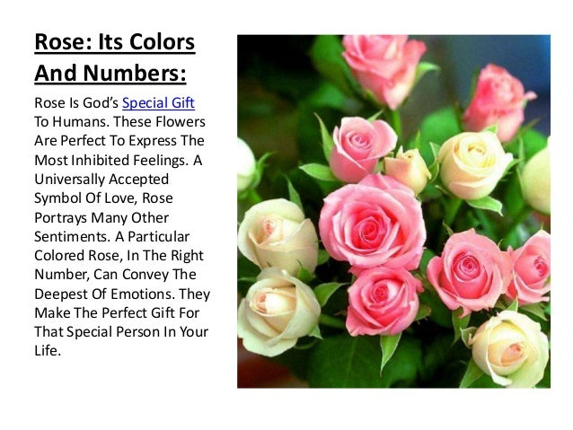 Rose: Its Colors And Numbers: Rose Is God's Special Gift To Humans. These Flowers Are Perfect To Express The Most Inhibite...