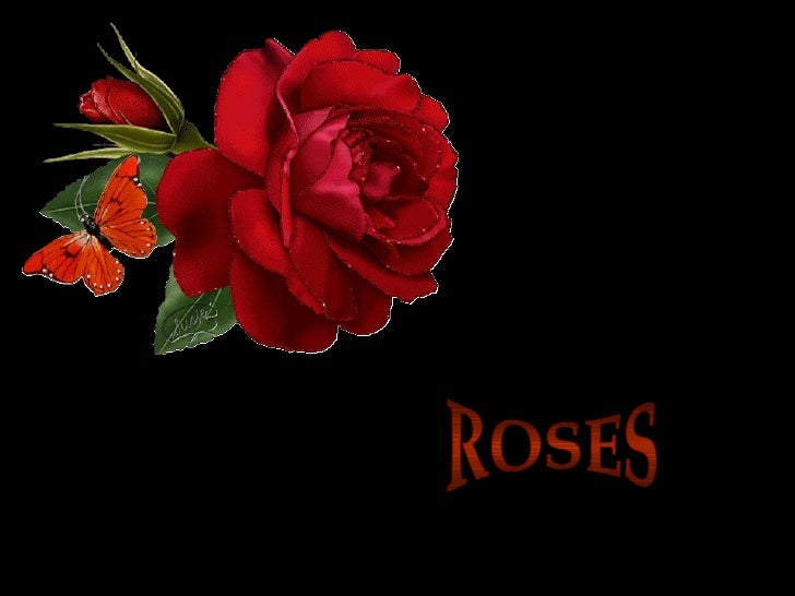 Roses  For My Love