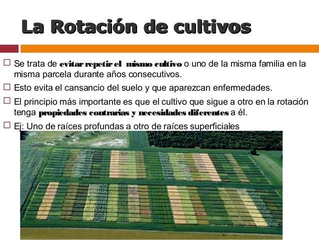 rotaci n de cultivos en agricultura ecol gica