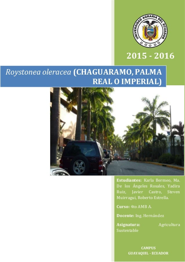 2015 - 2016 Roystonea oleracea (CHAGUARAMO,PALMA REAL O IMPERIAL) Estudiantes: Karla Bermeo, Ma. De los Ángeles Rosales, Y...
