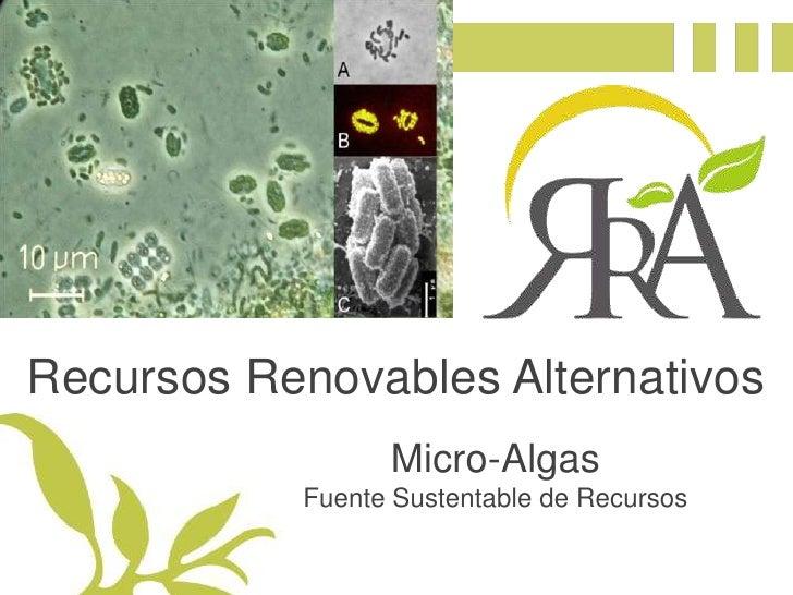 Recursos Renovables Alternativos<br />Micro-Algas<br />Fuente Sustentable de Recursos<br />
