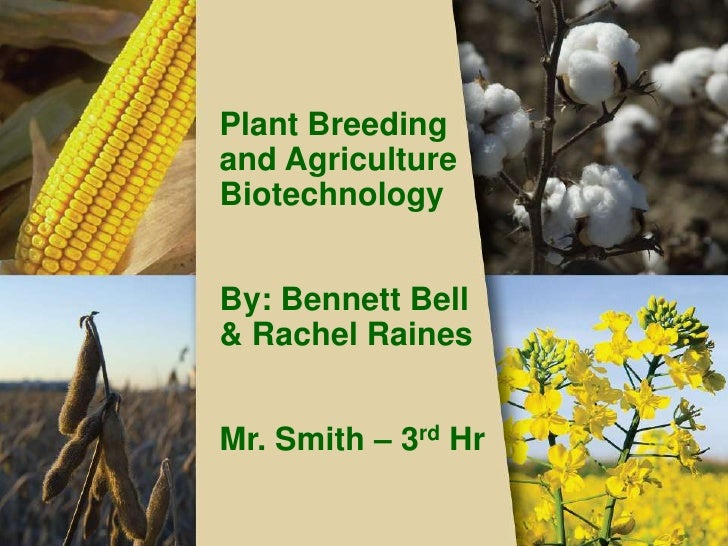 Plant Breeding and Agriculture Biotechnology<br />By: Bennett Bell  & Rachel Raines<br />Mr. Smith – 3rd Hr<br />
