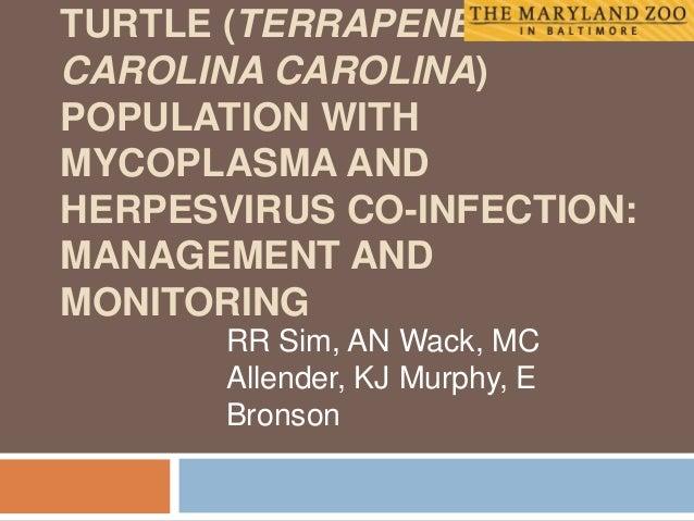 TURTLE (TERRAPENE CAROLINA CAROLINA) POPULATION WITH MYCOPLASMA AND HERPESVIRUS CO-INFECTION: MANAGEMENT AND MONITORING RR...