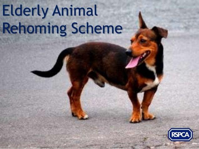 Elderly AnimalRehoming Scheme