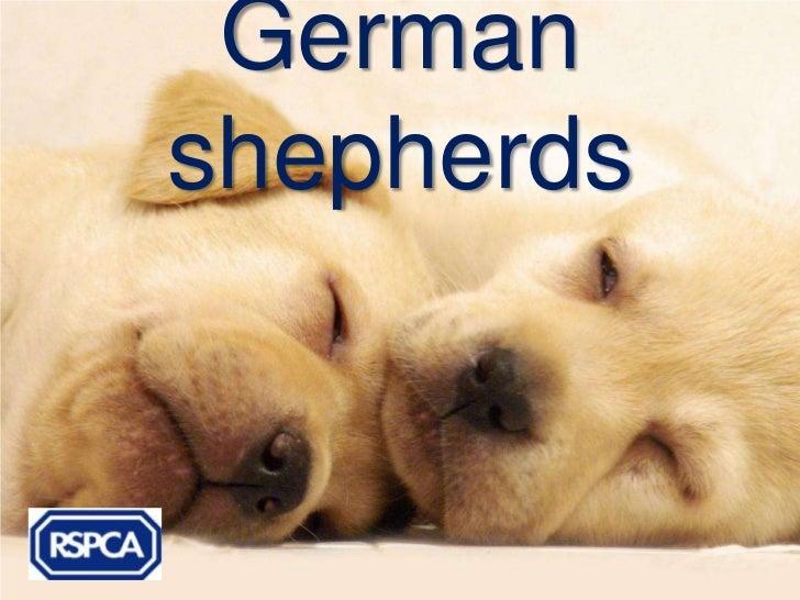 Germanshepherds