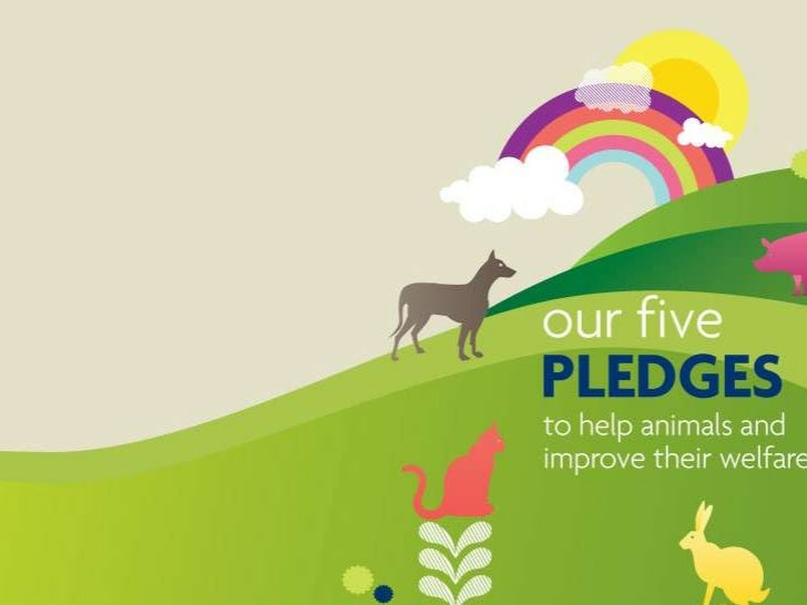 RSPCA - Our pledges