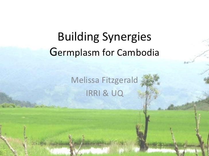 Building SynergiesGermplasm for Cambodia    Melissa Fitzgerald       IRRI & UQ                         1