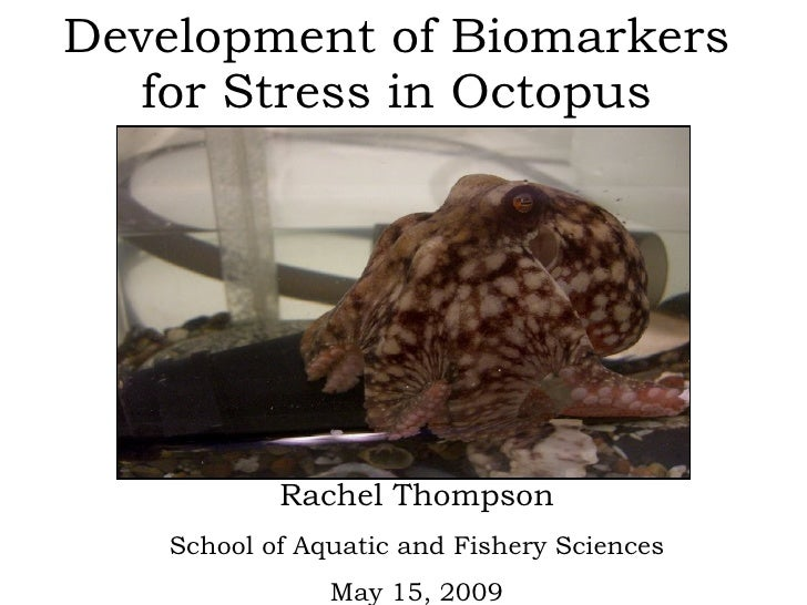 Development of Biomarkers for Stress in Octopus Rachel Thompson School of Aquatic and Fishery Sciences May 15, 2009