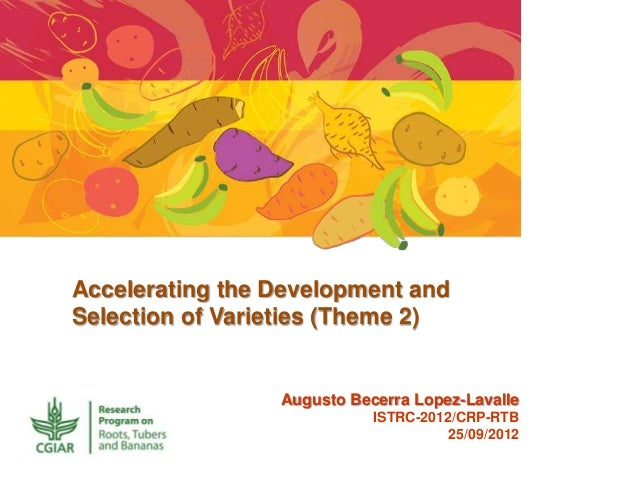 Accelerating the Development and Selection of Varieties (Theme 2) Augusto Becerra Lopez-Lavalle ISTRC-2012/CRP-RTB 25/09/2...