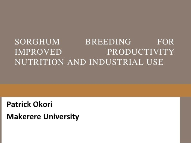 Sorghum breeding for Improved productivity nutrition and INDUSTRIAL use