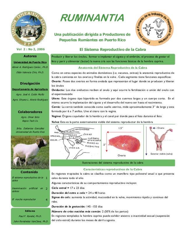 El Sistema Reproductivo de la CabraVol 2 : No 2, 2006 RUMINANTIA Contenido El sistema reproductivo de la cabra 1 Inseminac...