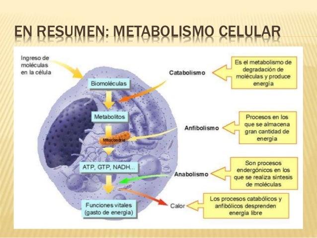 vias anabolicas de los carbohidratos