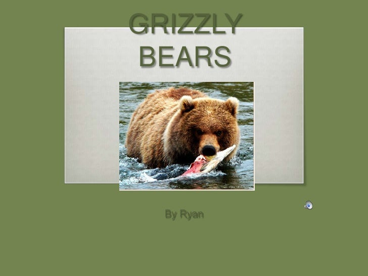 Grizzly Bears by Ryan