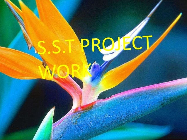 S.s.t project work