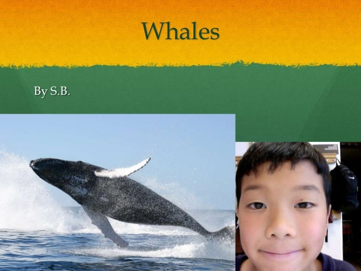 Whales<br />By S.B.<br />
