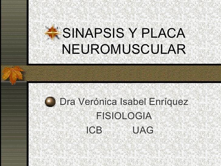 SINAPSIS Y PLACA NEUROMUSCULAR Dra Verónica Isabel Enríquez FISIOLOGIA ICB  UAG