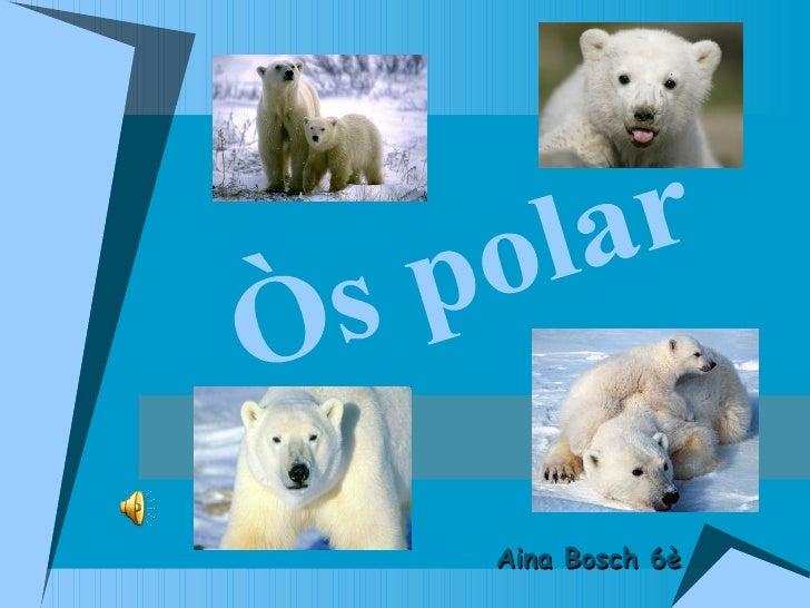 Òs polar Aina Bosch 6è