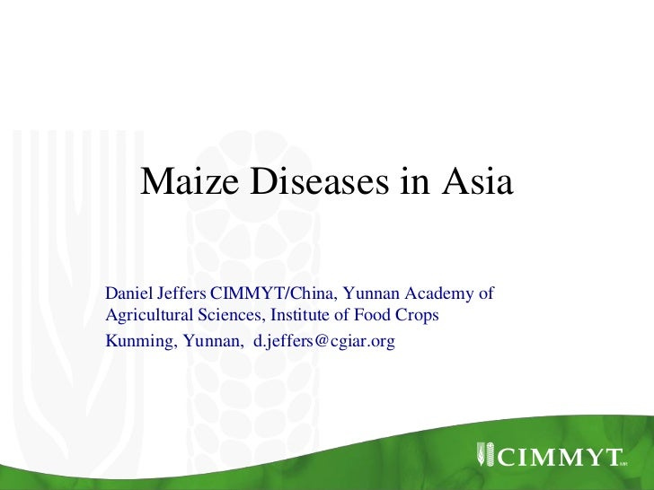 Maize Diseases in AsiaDaniel Jeffers CIMMYT/China, Yunnan Academy ofAgricultural Sciences, Institute of Food CropsKunming,...