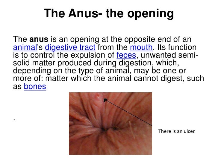 and function Anus rectums