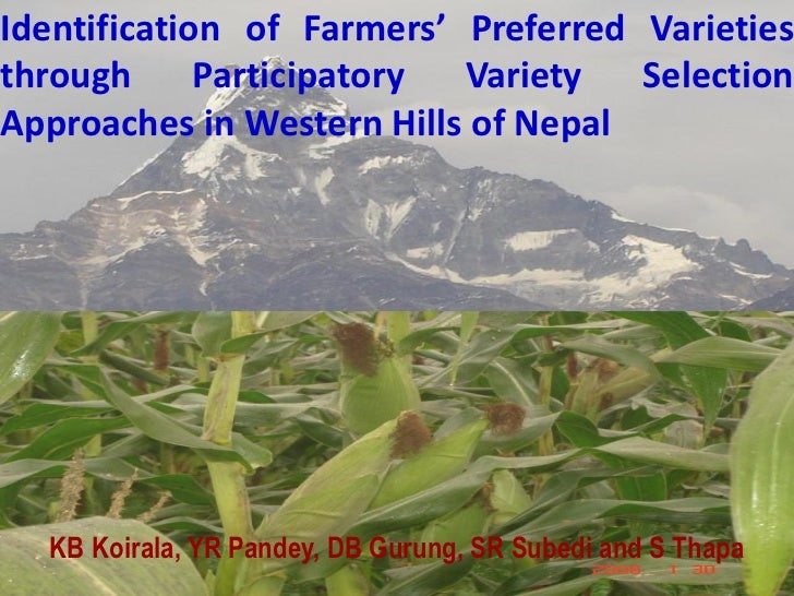 Identification of Farmers' Preferred Varietiesthrough      Participatory Variety   SelectionApproaches in Western Hills of...