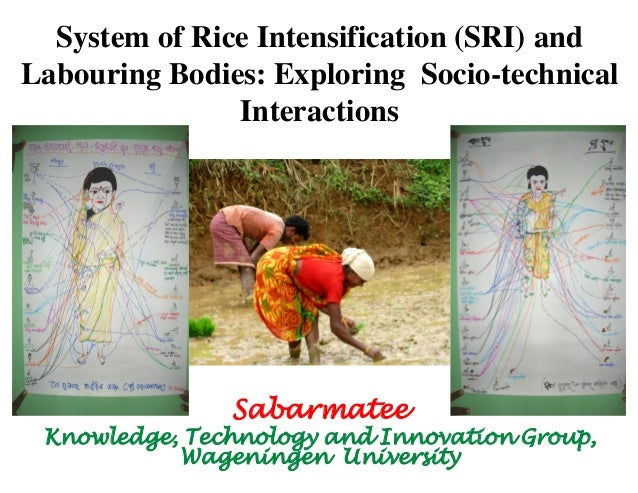 System of Rice Intensification (SRI) and Labouring Bodies: Exploring Socio-technical Interactions  Sabarmatee  Knowledge, ...