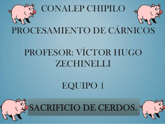 CONALEP CHIPILOPROCESAMIENTO DE CÁRNICOSPROFESOR: VÍCTOR HUGOZECHINELLIEQUIPO 1SACRIFICIO DE CERDOS.