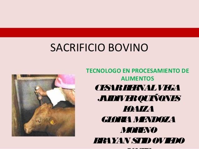 SACRIFICIO BOVINO      TECNOLOGO EN PROCESAMIENTO DE               ALIMENTOS        CE ARB R           S    E NALVE GA    ...