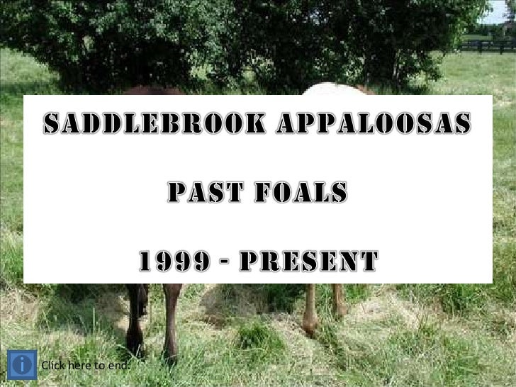 Saddlebrook foals