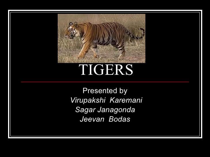TIGERS Presented by Virupakshi  Karemani Sagar Janagonda Jeevan  Bodas