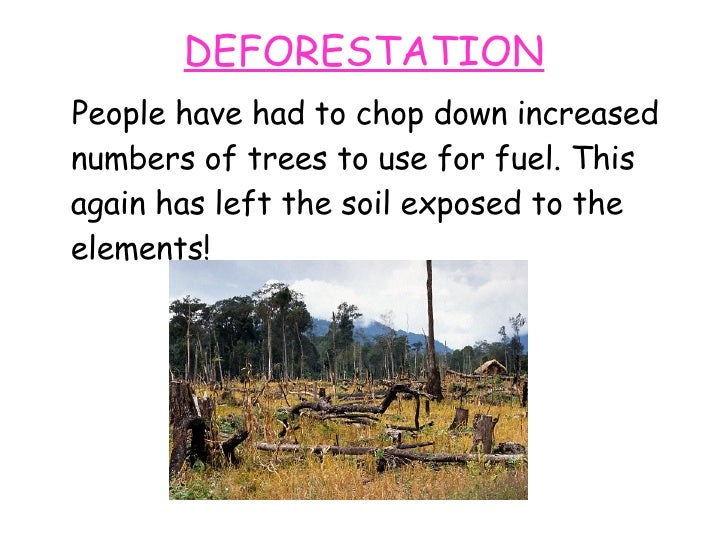 an analysis of the topic of the deforestation Use this url to link directly to this page.