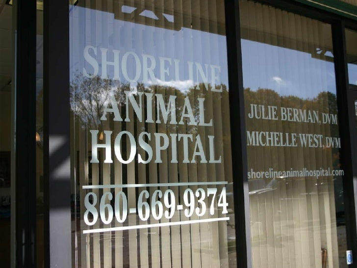 Shoreline Animal Hospital Tour