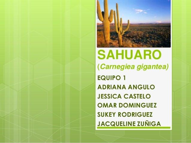 SAHUARO(Carnegiea gigantea)EQUIPO 1ADRIANA ANGULOJESSICA CASTELOOMAR DOMINGUEZSUKEY RODRIGUEZJACQUELINE ZUÑIGA