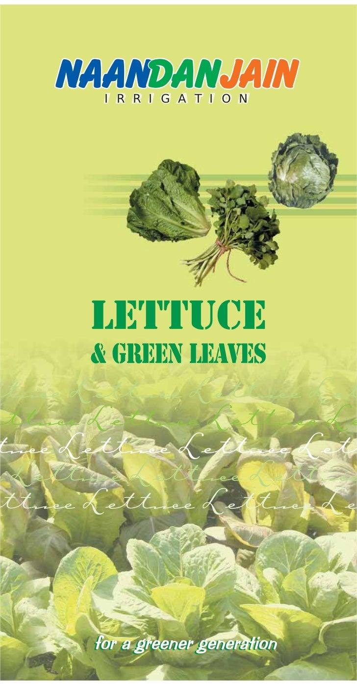 I R R I G A T I O Nttuce Lettuce Lettuce Letettuce Lettuce Lettuce Letuce Lettuce Lettuce Lette Lettuce Lettuce Lettuce tt...