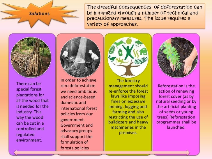 cause effect solution to deforestation Deforestation is a persistent problem with a multitude of causes deforestation solutions  and this homesteading is one of the primary causes of deforestation.