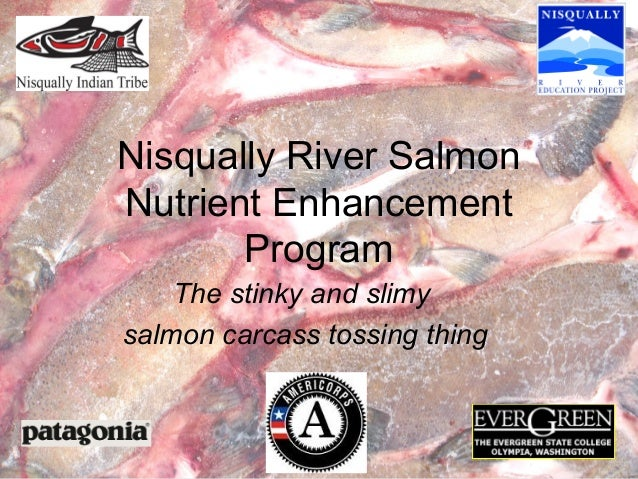 Nisqually River Salmon Nutrient Enhancement Program The stinky and slimy salmon carcass tossing thing
